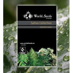 World Of Seed Sativa Collection 20Und Reg.