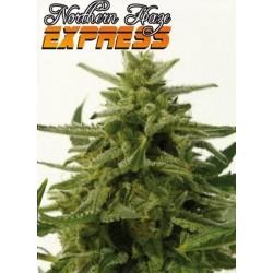 Positronics Northern Haze Express 5Und