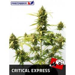 Positronics Critical Express 3Und