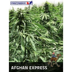 Positronics Afghan Express 5Und