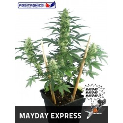 Positronics Mayday Express 1Und