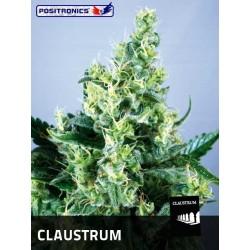 Positronics Claustrum 1Und Fem