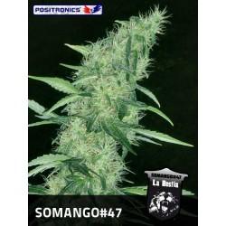 Positronics Somango 47 3Und Fem