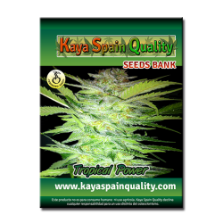 Kaya Spain Quality Tropical Power 5 und.