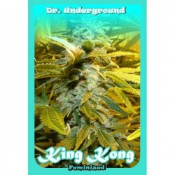 Dr Underground Auto King Kong 2Und