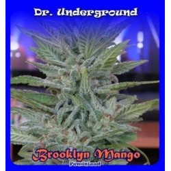 Dr Underground Brooklyn Mango 4Und Fem.