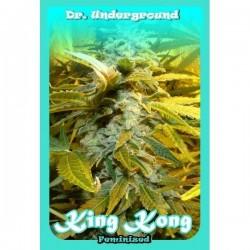Dr Underground King Kong 2Und Fem.