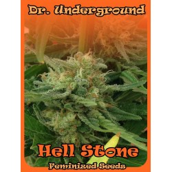 Dr Underground Hell Stone 2Und Fem.