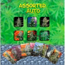 Buddha Seeds Assorted Blister 10Und Auto