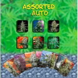 Buddha Seeds Assorted Blister 10Und Auto