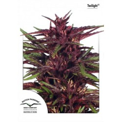 Twilight ® (5 semillas fem.)