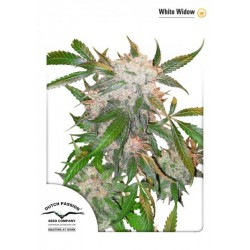 White Widow (5 semillas fem.)
