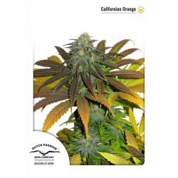 California Orange (5 semillas fem.)