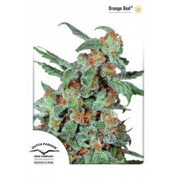 Orange Bud ® (5 semillas fem.)