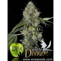 EVA WHITE DRAGON FEMINIZADA (6 UDS)