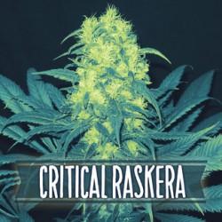 Critical Raskera