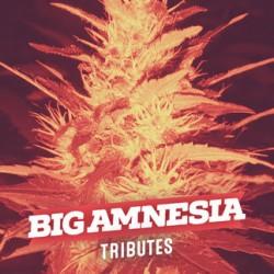 Big Amnesia (6 unid)