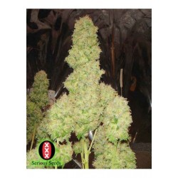 Serious Seeds Chronic 10 unids (R)