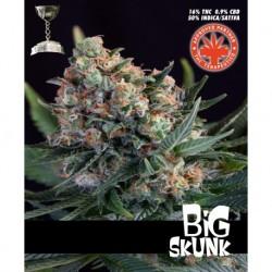 Pure SeedsBig Skunk 10 unid