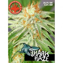Pure Seeds Shark Haze 3 unids