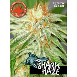 Pure Seeds Shark Haze 3 unids