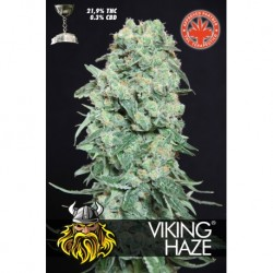 PURE SEEDS VIKING HAZE (5 UDS)