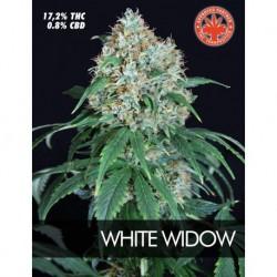 Pure Seeds White Widow 3 unids