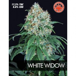 Pure Seeds White Widow 5 unids