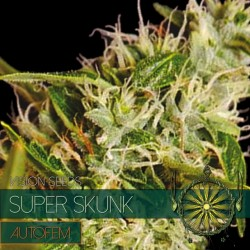 Vision Seeds Super Skunk Auto 3 unids