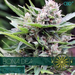 Vision Seeds Bona Dea CBD+ 3 unids