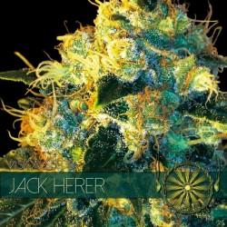 Vision Seeds Jack Herer 3 unids