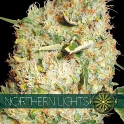 Vision Seeds Northern Lights 3 unids