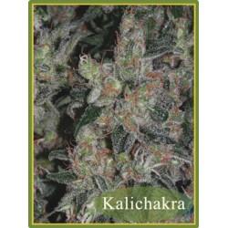 Mandala Seeds Kalichakra 10 unids (R)