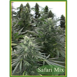 Mandala Seeds Safari Mix 20 unids (R)