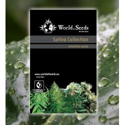 World Of Seed Sativa Collection 20Und Reg.