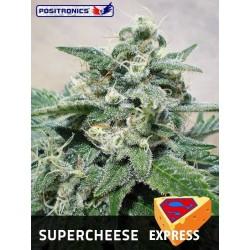Positronics Supercheese Express 5Und