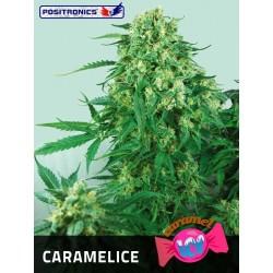 Positronics Caramelice 3Und Fem