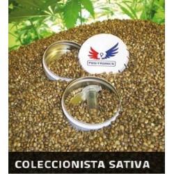 Positronics Coleccionista Sativa 6Und Fem