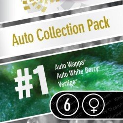 Paradise Seeds Auto Collection Pack1 6Und