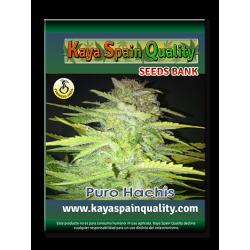Kaya Spain Quality Puro Hachis 5 und.