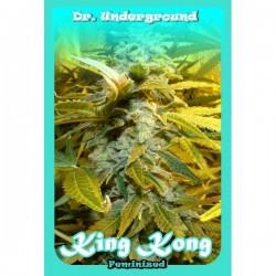 Dr Underground Auto King Kong 8Und