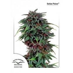 Durban Poison (10 semillas fem.)