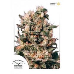 Euforia ® (5 semillas fem.)