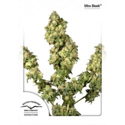 Ultra Skunk ® (10 semillas fem.)