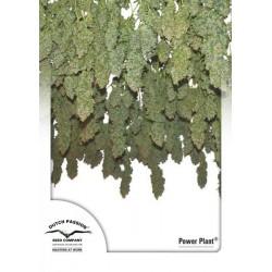 Power Plant ® (10 semillas fem.)