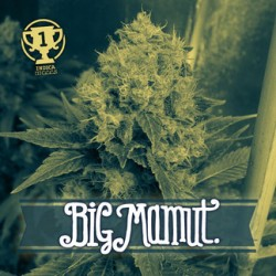 Big Mamut (2 unid)