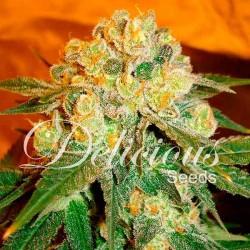 Delicious Seeds Marmalate 7Und Reg