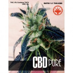 Pure Seeds CBD Pure 1 unid