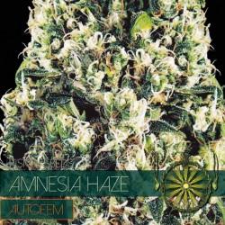Vision Seeds Amnesia Haze Auto 3 unids