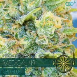 Vision Seeds Medical 49 CBD+ 3 unids